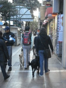 Maximiliano Marc and Bandit in the city of Córdoba - photo courtesy of Maximiliano