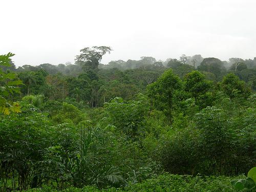 Reserva Allpahuayo Mishana, cuenca del Nanay, Loreto, Perú.