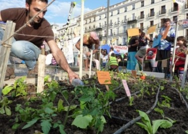 Urban garden planted in the Puerta del Sol by members of the Spanish indignado movement in May 2011. Photo by Lecamaleon (cc).