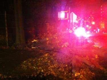 Fallen trees were reported throughout the city.