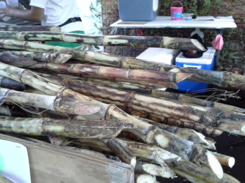 Estos son pedazos de caña de azúcar recién cortados. De aquí se saca...