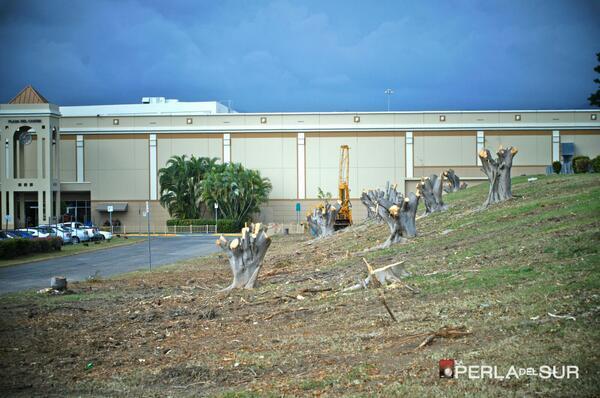 Una de las fotos ampliamente compartidas en Twitter sobre la tala de árboles en Plaza Caribe. Foto tomada por el periódico La Perla del Sur y compartida en su cuenta de Twitter (@LaPerlaPR).