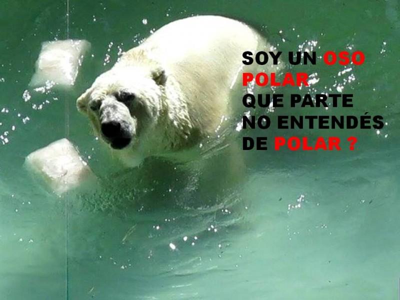 Imagen de la pagina de Facebook OSO POLAR Arturo