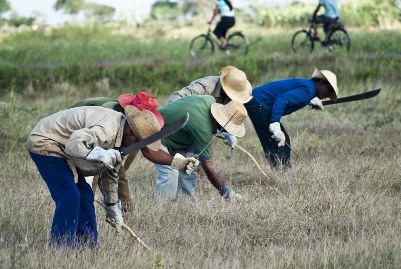 Entra en vigor el nuevo Código de Trabajo cubano (Foto: Alejandro Menéndez Vega)