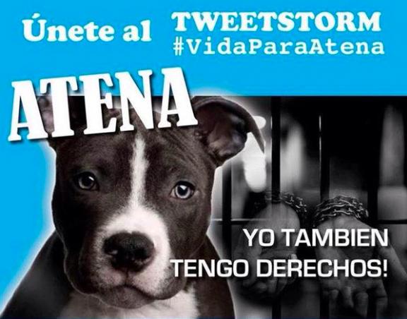 Imagen de una de las campañas en las redes sociales a favor de Atena, la perra pitbull, que luego de atacar mortalmente a un niño de dos años en Ecuador, será sacrificada.
