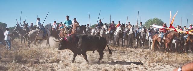Torneo del Toro de la Vega. Foto de TheAnimalDay.org en flickr con licencia cc by 2.0