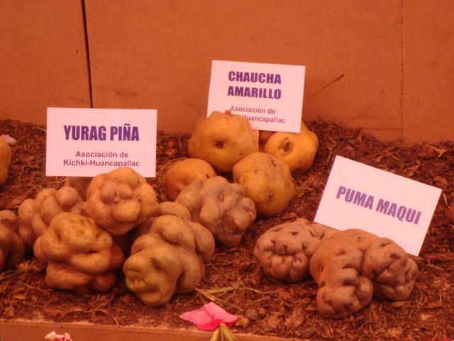 Variedades de papa peruana. Imagen de Flickr de la cuenta de Go!Pymes Fotos (CC BY-SA 2.0)
