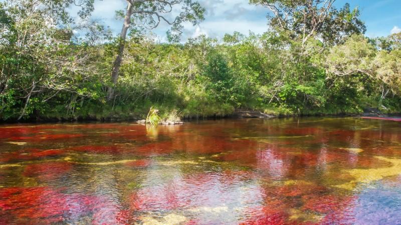 Caño Cristales, el río de los cinco colores, sector El Tapete. Fotografía de Mario Carvajal para Caño Cristales usada bajo licencia CC 3.0
