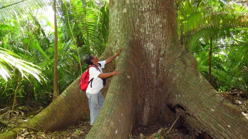 En México está reconocida la propiedad de la tierra a las comunidades y ejidos (Foto tomada del sitio oficial de Alianza Selva Maya y reproducida con permiso)