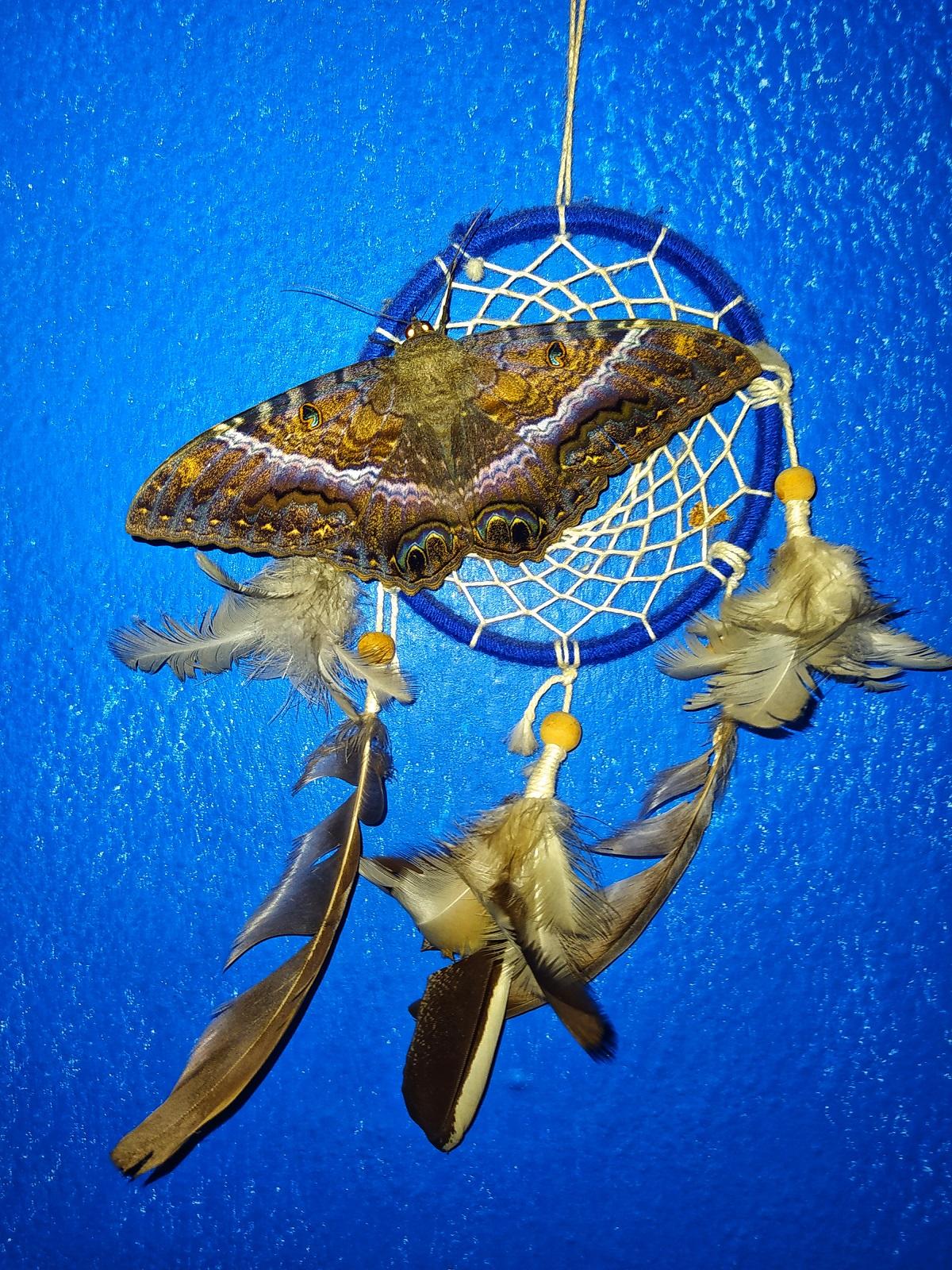 Photo couleur. Un papillon aux reflets chatoyants vient se poser sur un attrape-rêve bleu garni de plumes et de perles. Le fond (un mur ou une vitre opaque) est d'un bleu soutenu.