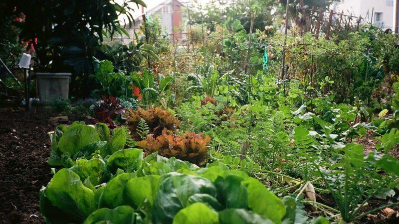 Différentes plantations dans un jardin urbain.