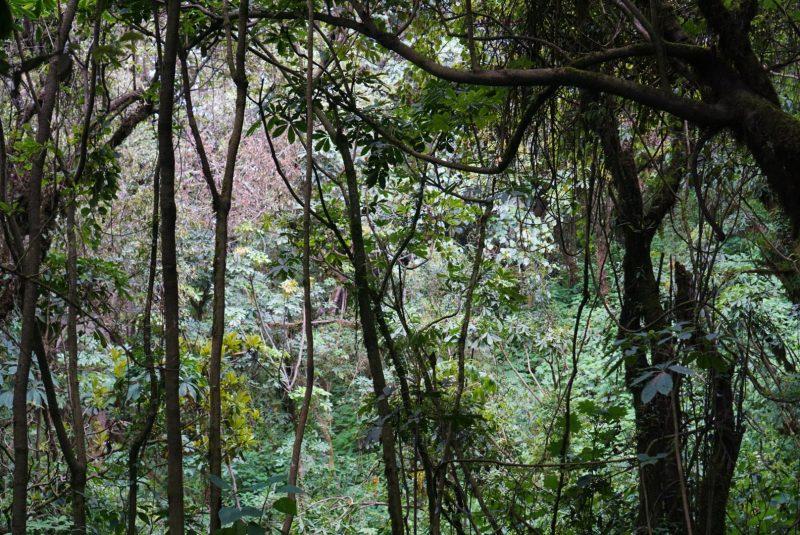 Arbres d'une jungle.