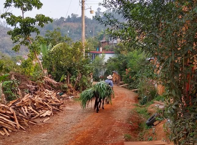 Un paysan transporte des feuillages sur le dos de son âne sur un chemin de campagne.
